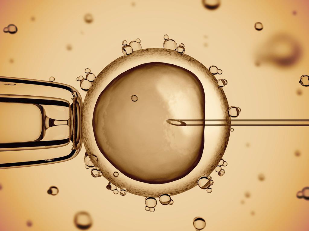 Sperm şöyle der: Bu döllenme ile müdahale eder mi