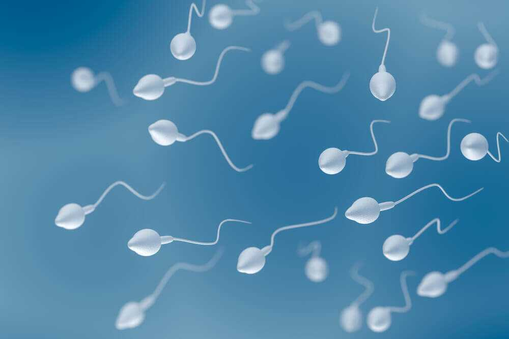 sperm sayisi