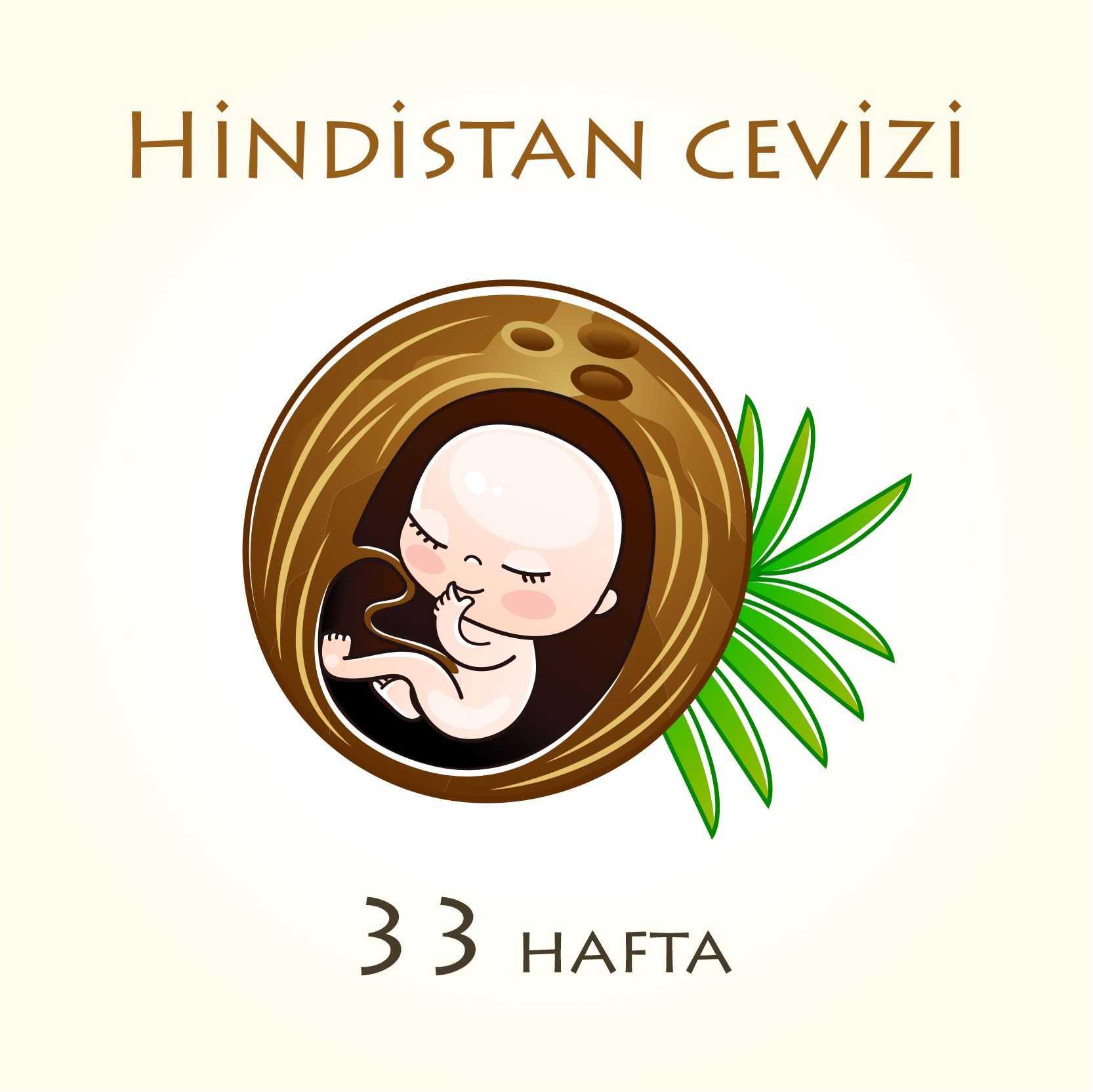 33. hafta bebek boyu