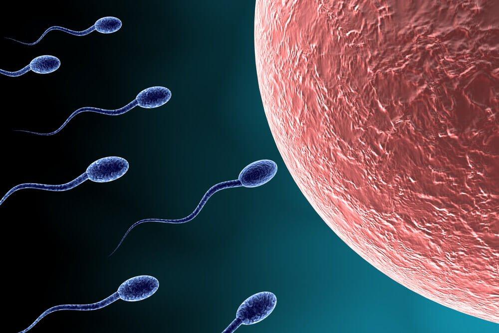 sperm-hizi